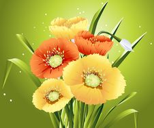 Free Spring Flowers Royalty Free Stock Images - 8212909