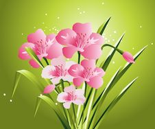 Free Spring Flowers Stock Images - 8213174