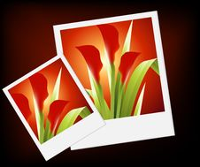 Free Spring Flowers Royalty Free Stock Image - 8213506