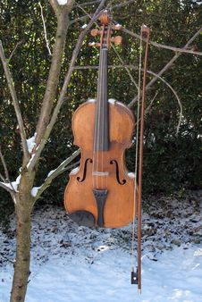 The Fiddle Tree Stock Photography