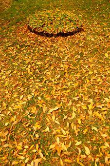 Free Autumn Royalty Free Stock Photos - 8215728