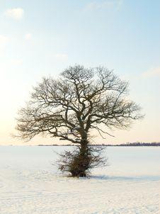 Free Winter Landscape Stock Photos - 8215973