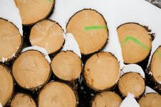 Free Snow Wood Trunks Royalty Free Stock Photo - 8216695