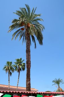 Free Palms Stock Photography - 8216982