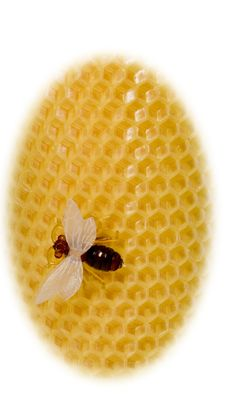 The Bee Sits On Yellow Equal Honeycombs Stock Images