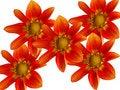 Free Flowers Decorative Stock Photos - 8226573