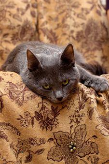 Free Lying Grey Cat Stock Photos - 8220213