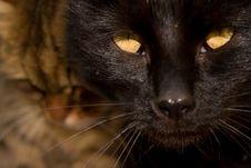 Free Black Cat Stock Image - 8220451