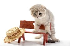 Free Cat Sits On A Bench Stock Images - 8223814
