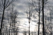 Free Winter Sky Royalty Free Stock Image - 8225926