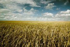 Free Summer Landscape Stock Photo - 8225960