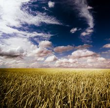 Free Summer Landscape Royalty Free Stock Photography - 8225997