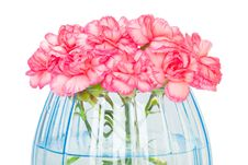 Free Carnations Royalty Free Stock Photography - 8227117