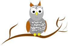 Free Owl In Tree Stock Photo - 8227360