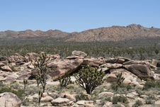 Free Joshua Trees In Mojave Desert Royalty Free Stock Images - 8228279