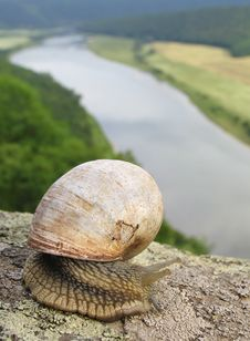 Free Snail Stock Photography - 8228422
