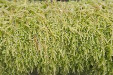 Free Moss Stock Photo - 8228700