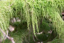 Free Moss Stock Photo - 8228750