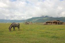 Free On Prairie Horse Royalty Free Stock Photo - 8228865