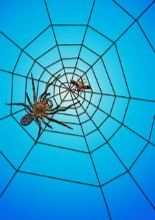 The Spider Succeed In Catching Food Royalty Free Stock Photo