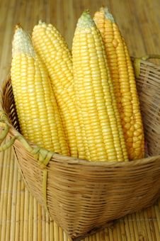 Sweet Corns Stock Image