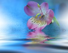 Free Beautiful Flowers Reflected In The Water, Spa Concept.Spa Treatment. Spa Massage. Wellness Spa.Artistic Blue Background. Stock Photos - 82284553