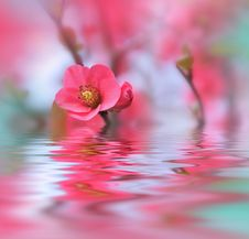 Beautiful Flowers Reflected In The Water, Spa Concept.Spa Treatment. Spa Massage. Wellness Spa.Spring Nature Background.Colorful. Royalty Free Stock Images