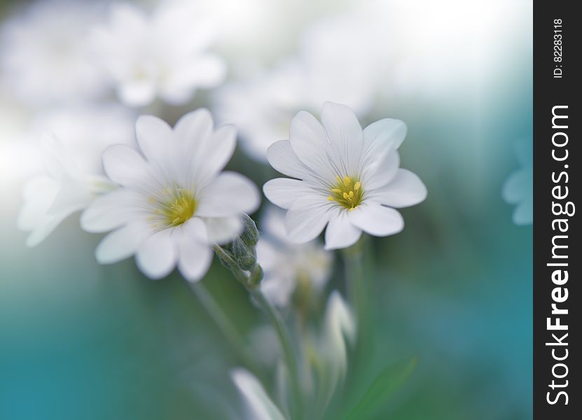 Beautiful Spring Nature Background And White Flower Abstract