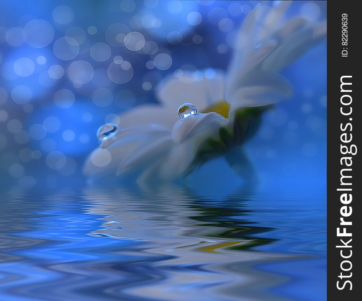 White flowers over water.Incredibly beautiful Nature.Colorful Blue Background.Spa,pond,water.Relax,aroma.