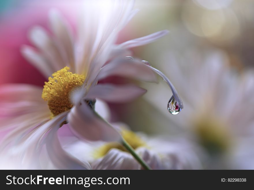 Incredibly Beautiful Nature Art Photography Fantasy Design Creative Background Amazing Colorful Flowers Garden Abstract Web Banner Free Stock Images Photos 82298338 Stockfreeimages Com