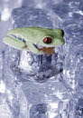 Free Frog Stock Images - 8235334