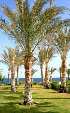 Free Palms In Hotel Makadi Bay Stock Image - 8230251