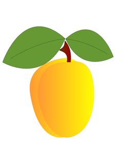 Free Apricot Stock Photo - 8230610