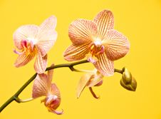 Free Orchid Composition Stock Image - 8231531