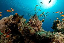 Free Coral And Fish Stock Image - 8232491