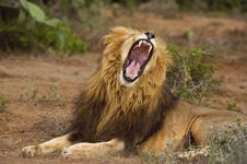 Free Lion Weapons Royalty Free Stock Photo - 8233945