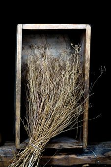 Free Dry Grass Stock Images - 8234344