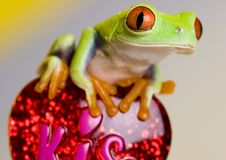 Free Frog Stock Images - 8235134