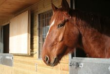 Horse In A Stable Royalty Free Stock Photos