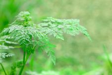 Free Close Up Of Fern Stock Images - 8237384