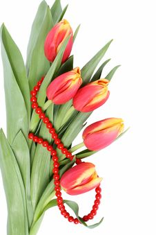Free Tulip Flowers Isolated Royalty Free Stock Image - 8239356