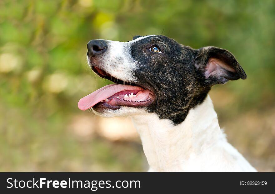 Happy Dog Tongue