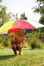 Free Rain Stock Photos - 8242173