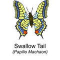 Free Swallow Tail Butterfy Stock Photo - 8243700