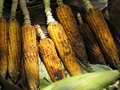 Free Grilled Maize Corn Stock Photography - 8247292