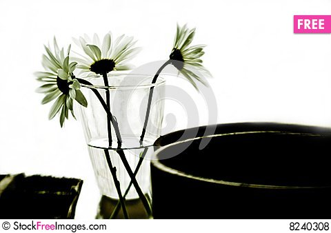 Backlit Flowers Stock Photo
