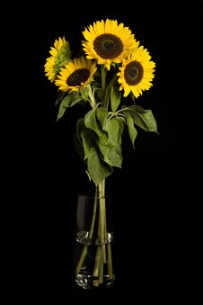 Free Sunflowers Stock Images - 8240954