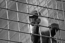 Free Jail 2 Royalty Free Stock Photo - 8241145