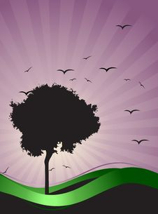 Free Old Tree Silhouette, Season Background Stock Image - 8241421
