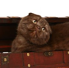 Free Kitten Is In A Trunk. Royalty Free Stock Photo - 8244145